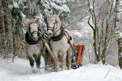 Winter Festivals in New Brunswick