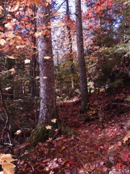 Dickson Falls Hiking Trail - Top ten fall hiking trails