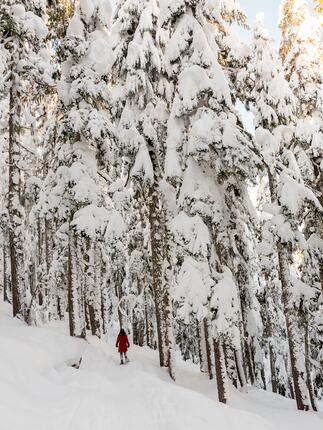 Snowshoeing in NB
