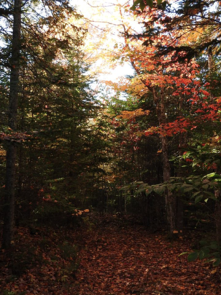 Hiking trail near Amsterdam Inn hotels in Sussex, Moncton, Fredericton, Quispamsis